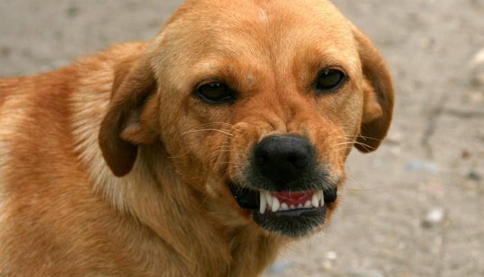 dog-763058_1280